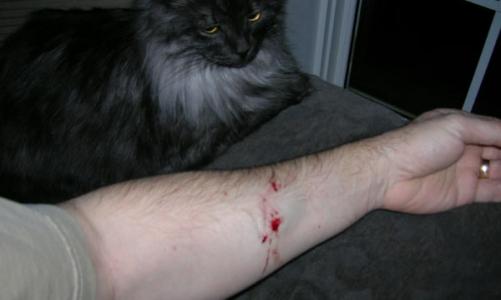 Опасны укусы котов